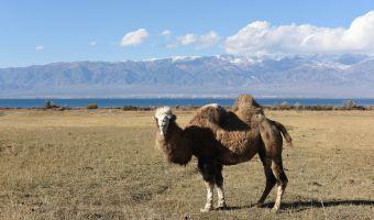 Kirghizistan - Ouzbékistan - Turkménistan