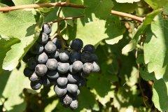 Areni_Wine_Factory.JPG